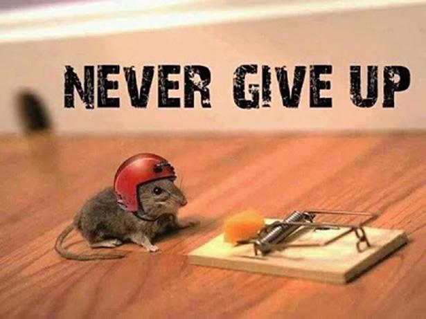 Motivationssprüche - Seite 2 Persistence
