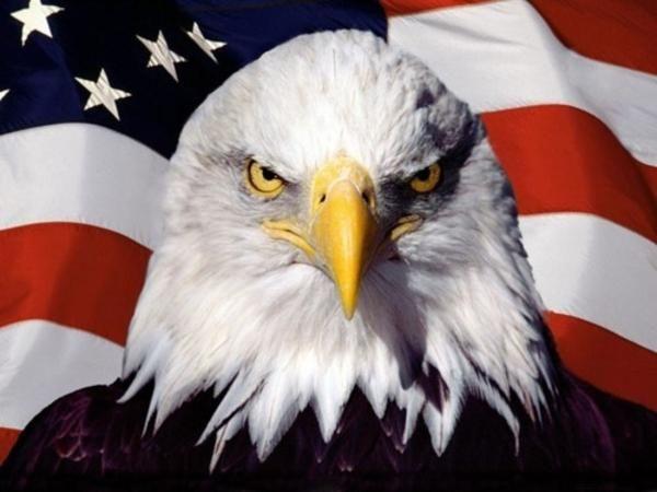 american-pride-eagle
