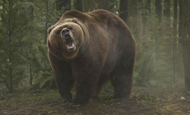 big_bad_bear