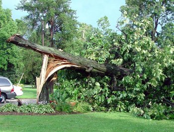 storm-damaged-tree