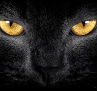 eyes_on_gold
