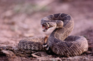 2016-07-22_coiled_up_snake