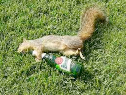 squirrel_beer