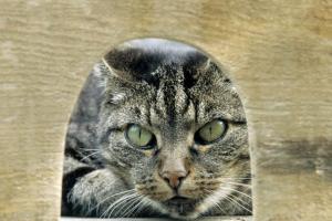 cat_waiting